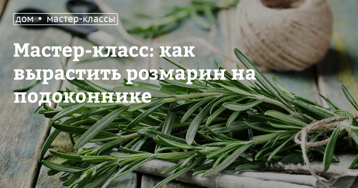 Как сажать розмарин в открытый грунт семенами 107