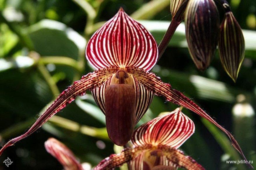 Орхидея из семян в домашних условиях из китая