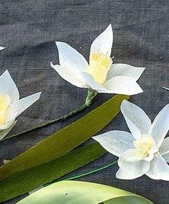 Jonquil starter flower 3