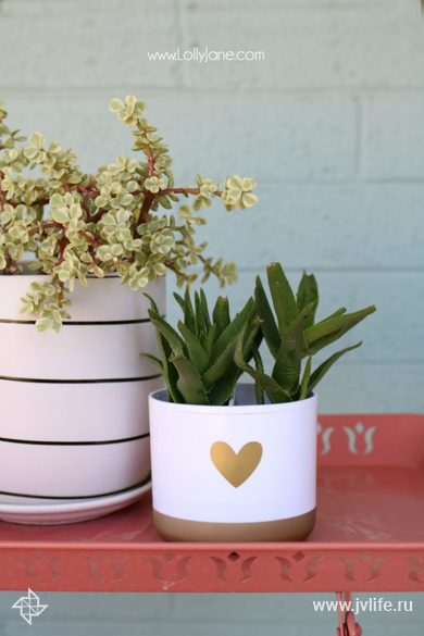 Succulent planter hack