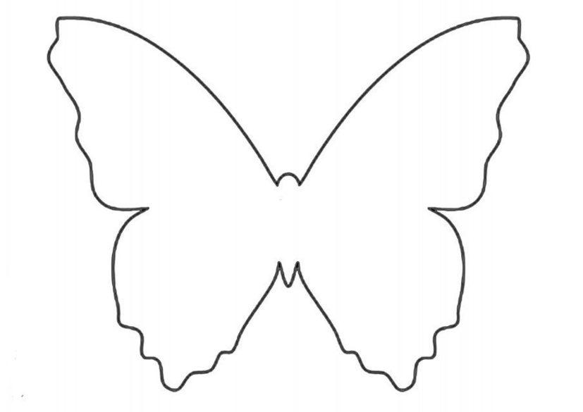 Buterflies 10 640x905
