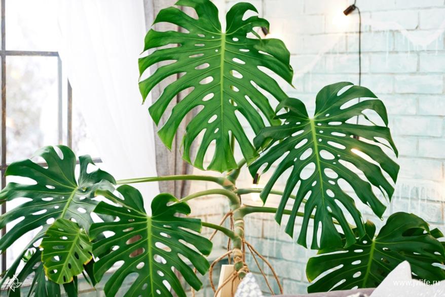 Какие необычные растения можно выращивать в квартире?